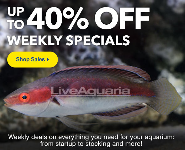 Save up to 40% on Weekly Specials