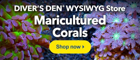 Diver's Den WYSIWYG Store Maricultured Corals