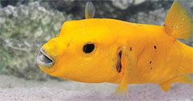 Improve Aquarium Diet with Frozen Fish Food