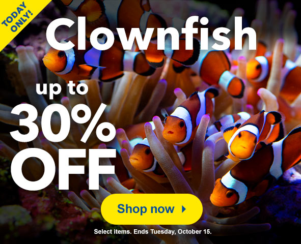 Clownfish up to 30% Off