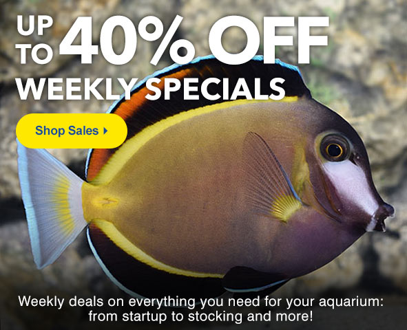 Up to 40% Off Weekly Specials