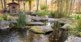 Fall and Winter Feeding Tips for Pond Fish
