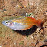 Freshwater Fish & Inverts Sale