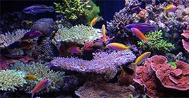 Aquarium Maintenance While You're Away