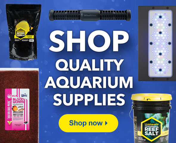 Shop Quality Aquarium Supplies