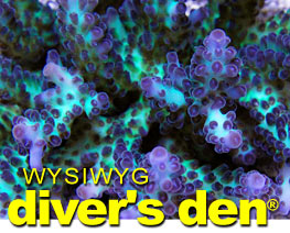 Diver's Den - WYSIWYG Fish, Corals, Inverts & More