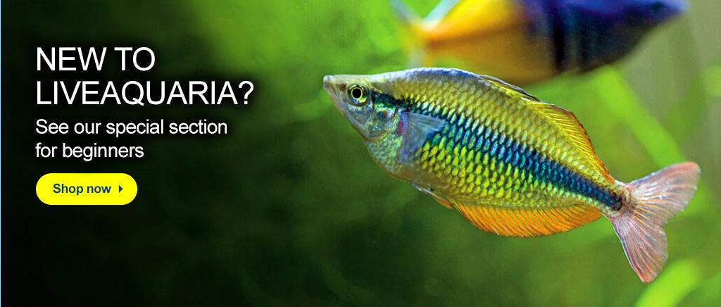New to LiveAquaria? See our special section for beginners