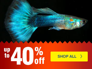 Weekly Specials from LiveAquaria.com - Fish, Corals, Inverts and more on sale for your aquarium