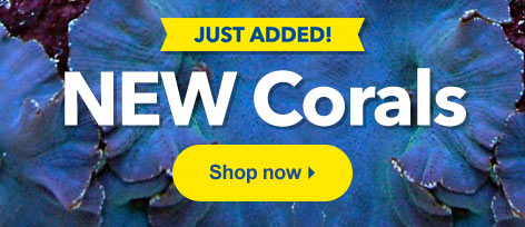 New SPS, LPS, and Soft Corals Available at LiveAquaria®