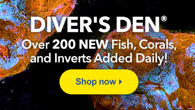 Exclusive Aquatic Life at LiveAquaria® Diver's Den® WYSIWYG Store
