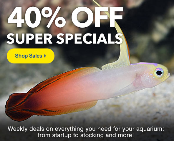 LiveAquaria® Aquatic Life and Aquarium Supplies on Sale