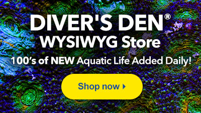 Shop LiveAquaria Diver's Den WYSIWYG Store for 100's of One-of-a-Kind  Aquatic Life added Daily