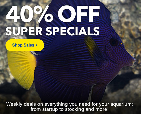 Shop LiveAquaria Sale and Clearance Category for the Best Deals on Quality Aquatic Life and Aquarium Supplies.