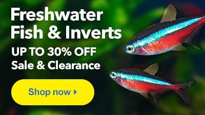 Shop LiveAquaria Freshwater Fish Sale