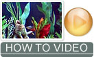 How to Set Up a Freshwater Aquarium