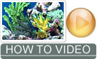 How to Set Up a Marine Aquarium